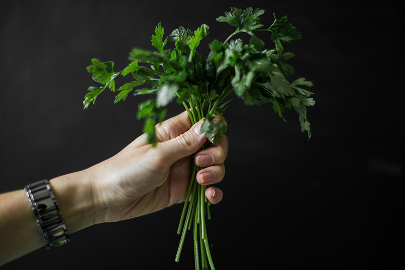 gruene saefte selber entsaften